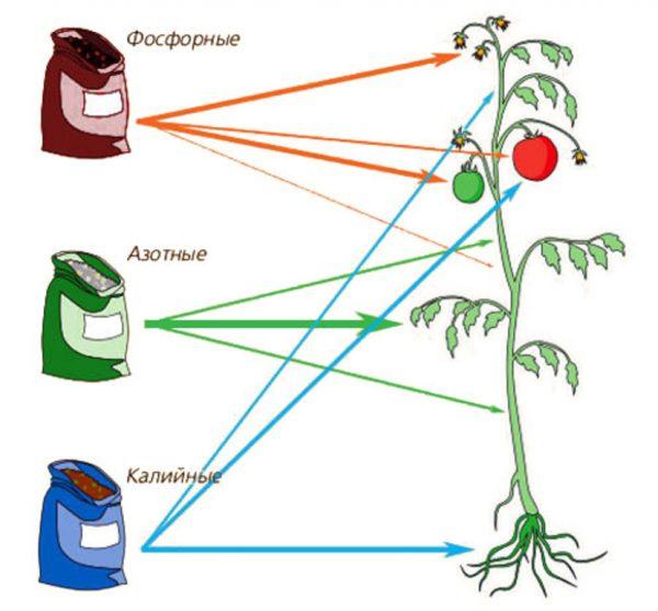 Действие полезных элементов на растения