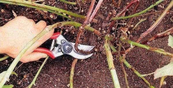 Чтобы урожай следующего года не оказался под вопросом, необходимо поступательно проводить уходовые осенние мероприятия