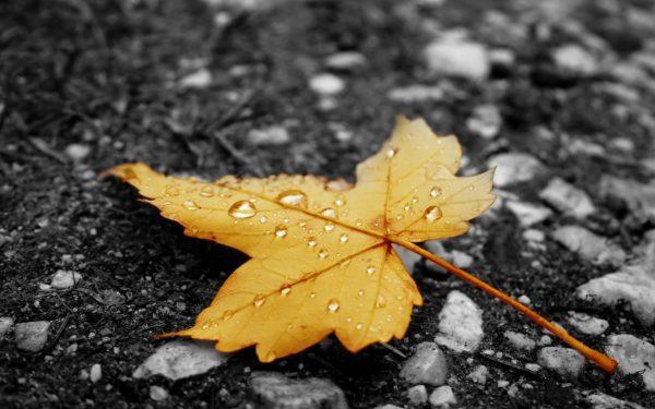 Осень считается благоприятным сезоном для улучшения качества почвы