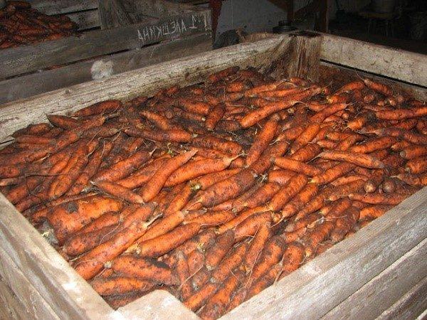 Перед сборкой морковь нужно тщательно очистить и обрезать по всем правилам