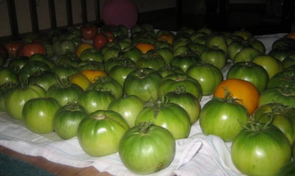 Чем больше расстояние между плодами, тем лучше они вентилируются