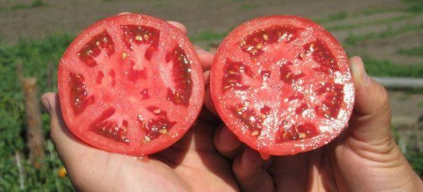 Для дальнейшей рассады подходят семена исключительно зрелых плодов