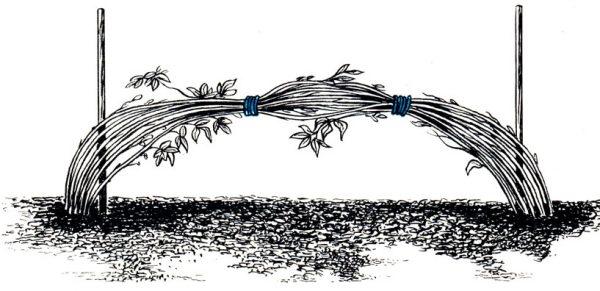 Для связывания малины желательно использовать специальные прочные нити