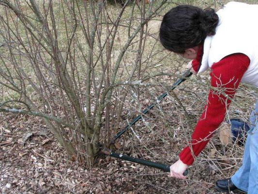 Главным преимуществом весенней обрезки является отличная просматриваемость ветвей на предмет изъянов