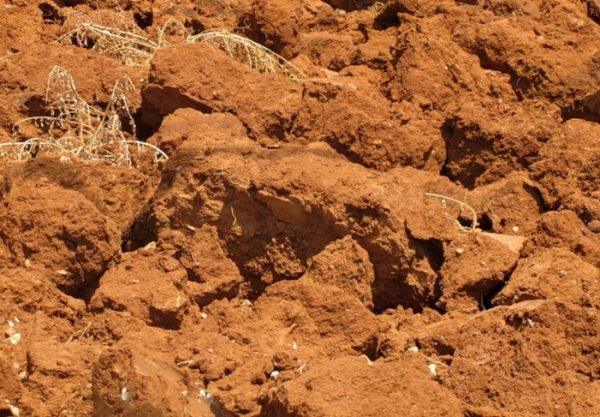 Глинистая почва считается тяжелой, потому без предварительной обработки не подходит для выращивания чеснока