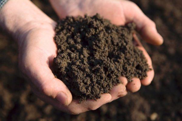 Готовность почвы тестируют методом сжатия