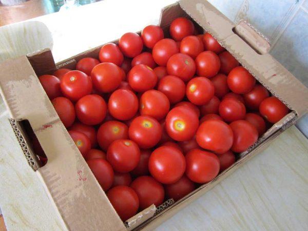 Хранение помидоров в несколько слоев без защиты в виде соломы или опилок очень ограничено по времени