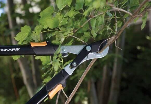 Летом ветви смородины удаляются лишь при крайней необходимости, к примеру - при заражении вредителями