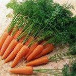 Морковь раннего срока созревания