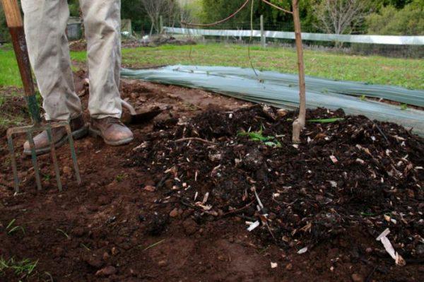 Мульчирование позволит удержать влагу внутри почвы и воспрепятствует росту сорняков