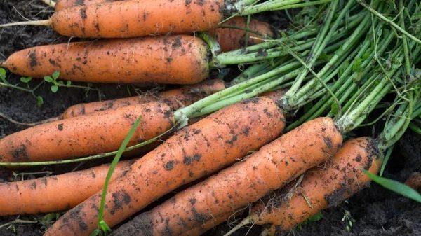 Не пытайтесь очистить морковь до идеального состояния - так вы рискуете повредить ее