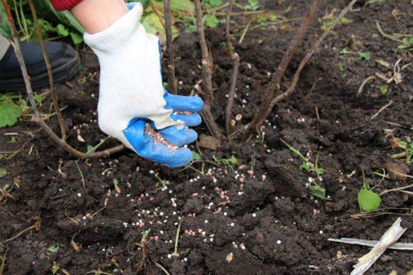 Осенью стоит обращать внимание на удобрения с высоким содержанием калия