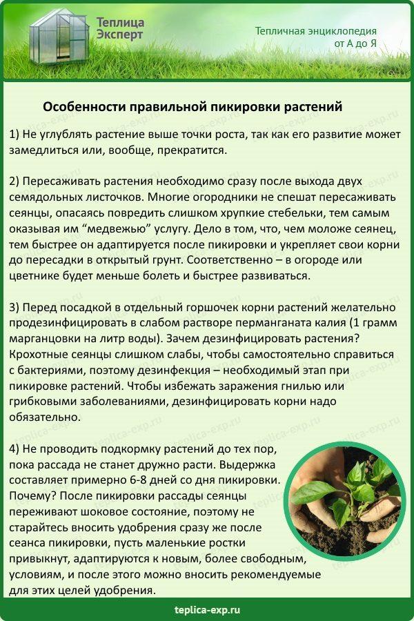 Особенности правильной пикировки растений