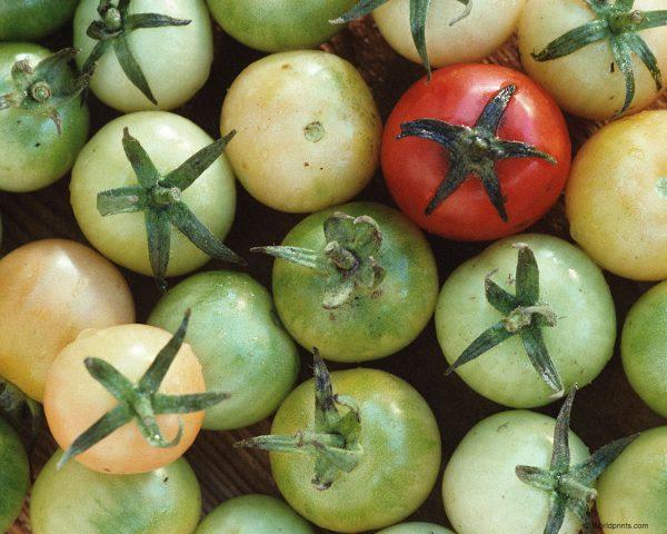 Плоды разной степени зрелости не рекомендуется хранить рядом друг с другом