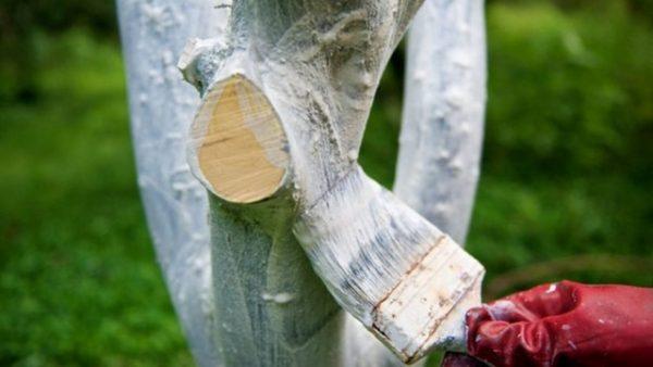 Побелка позволяет избежать размножения под корой яблони паразитов и защищает дерево от прямых лучшей солнца