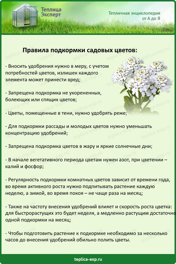 Правила подкормки садовых цветов