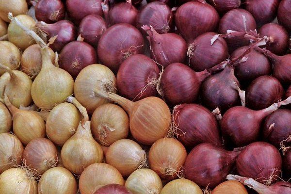 Сорта лука легче всего различать по цвету луковицы