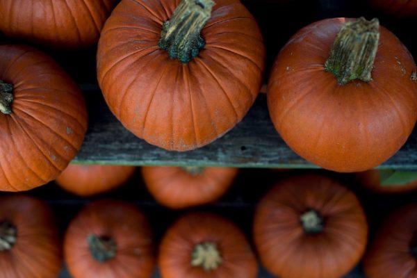 Профилактический осмотр в течение зимы позволит лучше сохранить плоды