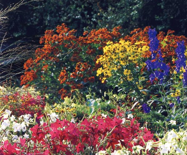 Растение имеет несколько десятков сортов и широко используется в ландшафтном дизайне