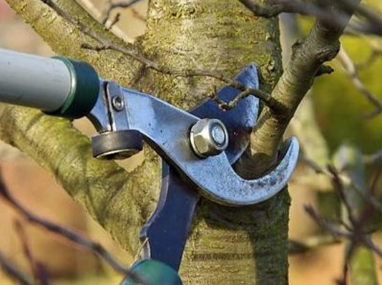 Санитарная обрезка требует от садовода постоянно быть на чеку и периодически осматривать деревья