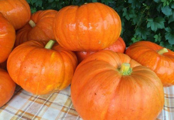 Среднеспелые тыквы насыщены витамины и полезными веществами
