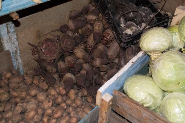 Свекла хорошо дополняет картофель и забирает излишнюю влажность
