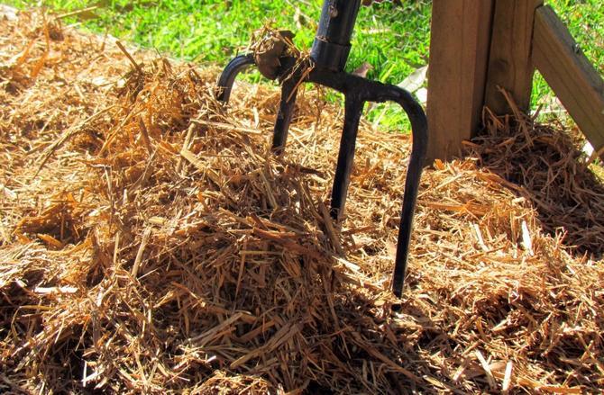 В качестве мульчи садоводы, как правило, используют солому