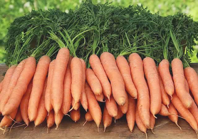 В солнечных областях России сбор раннеспелой моркови приходится на начало лета