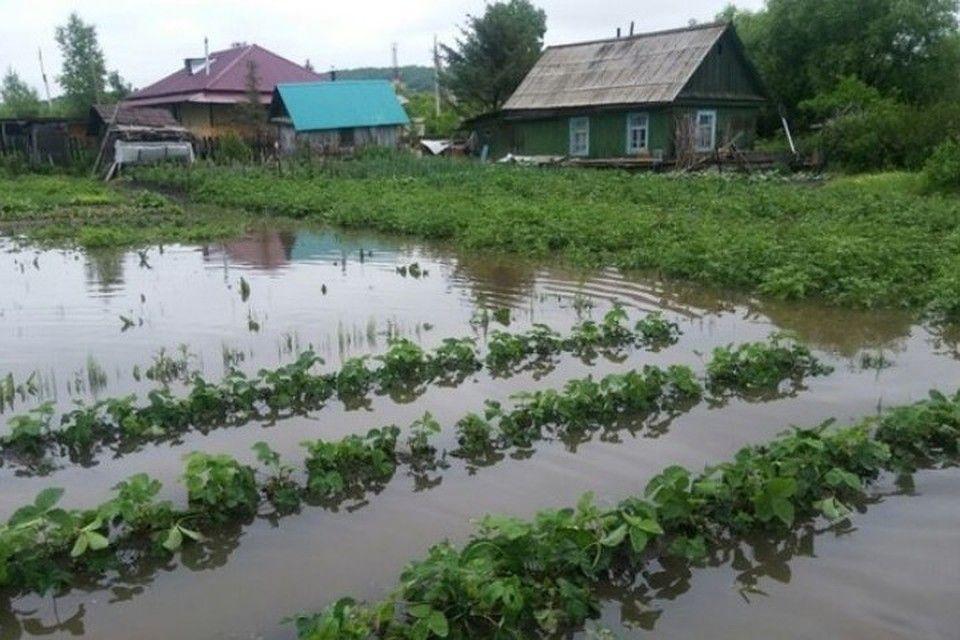 В зависимости от погодных условий, дожди могут как помочь созреванию моркови, так и загубить ее
