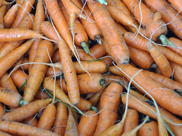 Вторичное прорастание характерно для передержанной моркови
