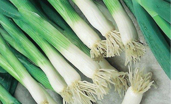 Лук-батун: уход и выращивание