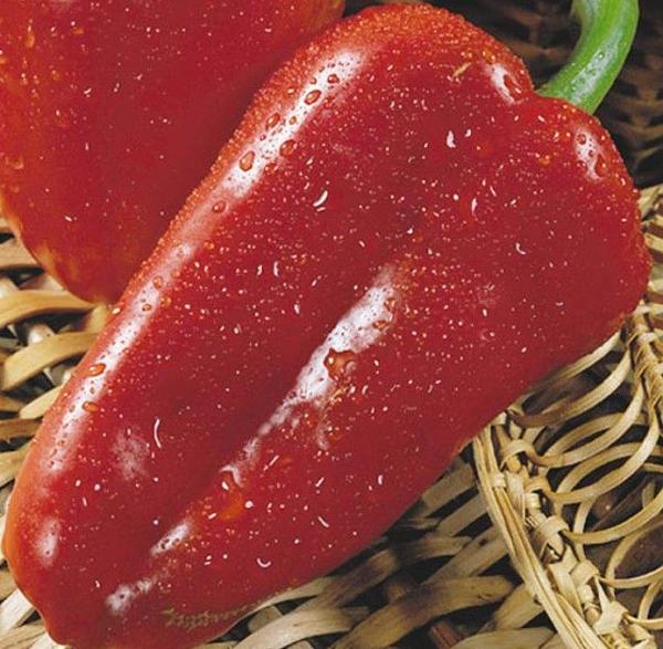 Перец сладкий «Атлант»: описание сорта