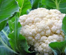 Цветную капусту нужно сажать в богатый грунт