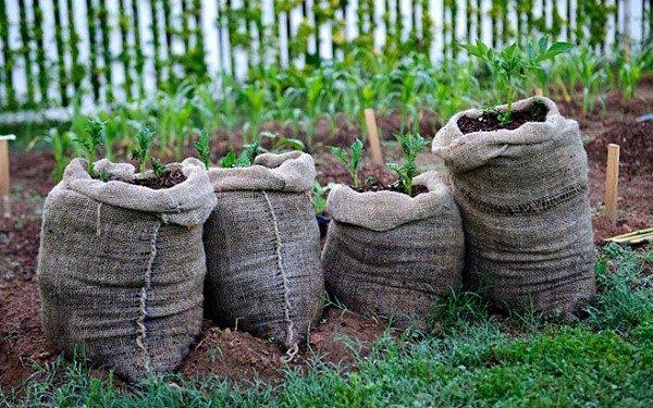 Урожайность рассматриваемой технологии не вызывает никаких сомнений