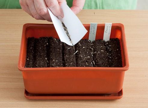 Чтобы семена не прилипали к пальцам, сыпать удобнее с листа бумаги