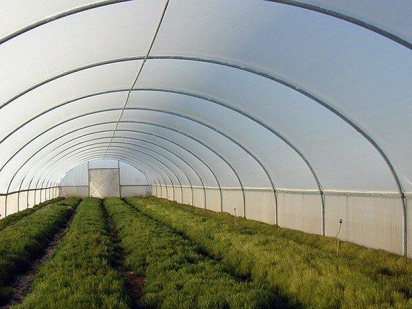 Для промышленного взращивания овощей с целью их последующей продажи необходимо зарегистрировать бизнес официально