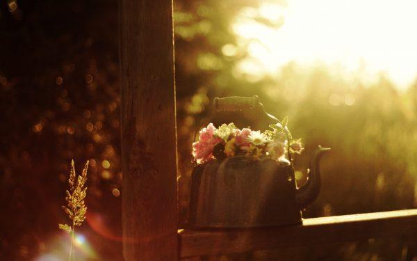 Прямые солнечные лучи негативно отражаются на росте примулы