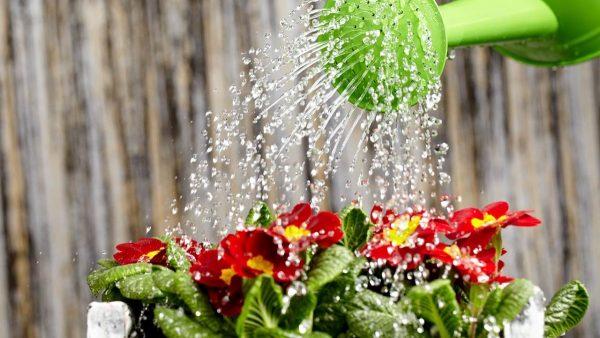 Полив считается основной уходовой процедурой на этапе прорастания семян