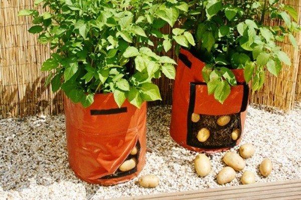 Удобнее всего использовать для взращивания картошки специальные садовые мешки, оборудованные клапанами, через которые можно проветрить корни растения, удалив лишнюю влагу, и убрав урожай
