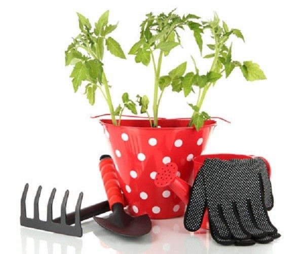 Азот - обязательный элемент, необходимый помидорам