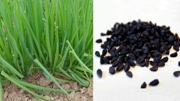 Как выглядят семена культуры