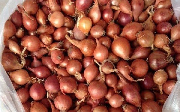 Сорта красного лука севок — Sam-Village