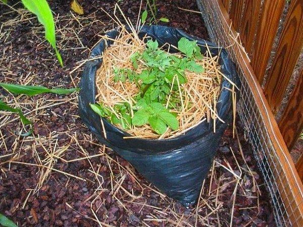 Разместить мешок с картошкой можно у стены дома, главное, чтобы не под сливами, дабы в него не попадало излишнее количество воды