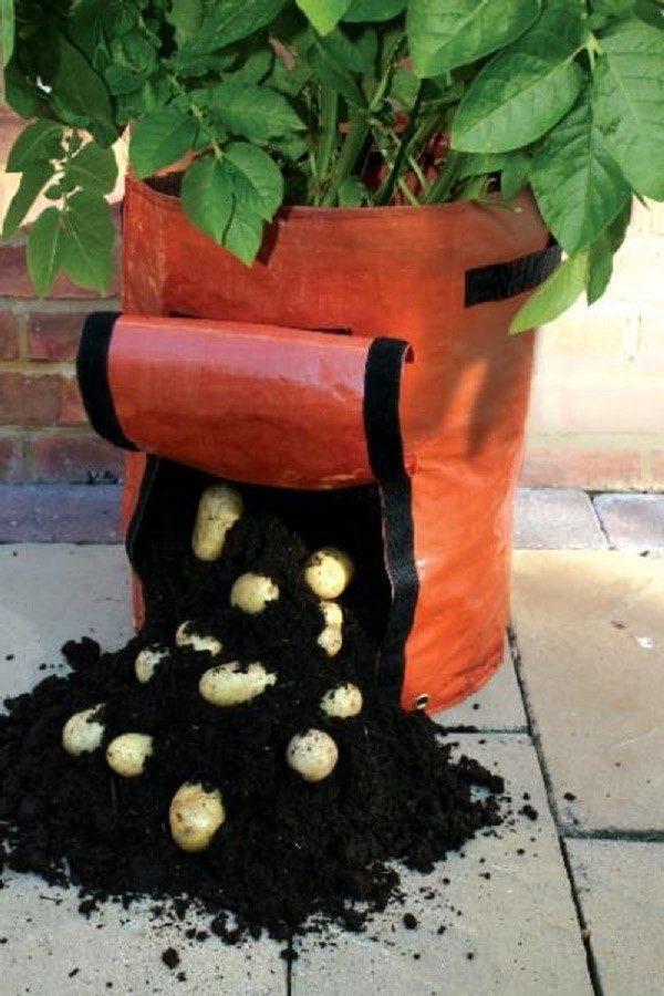 Не пытайтесь сэкономить на собственном урожае. Постарайтесь купить садовые мешки. Их можно использовать многократно, при этом, они серьезно облегчат вам жизнь