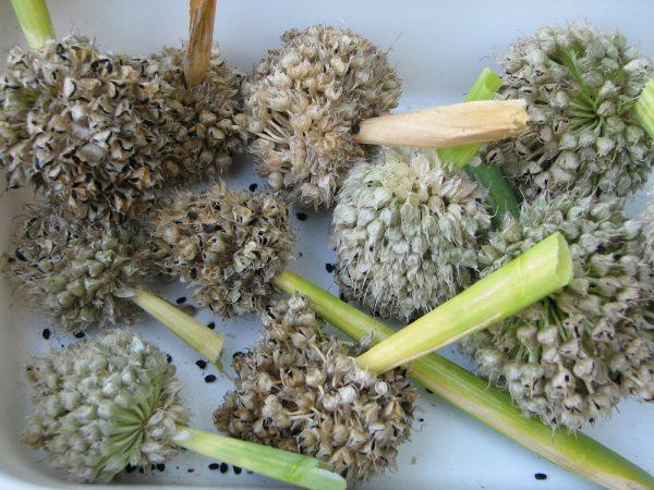 Время посева семян зависит от климатических особенностей местности