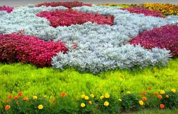 Если цинерария растет рядом с влаголюбивыми растениями, их поливают отдельно