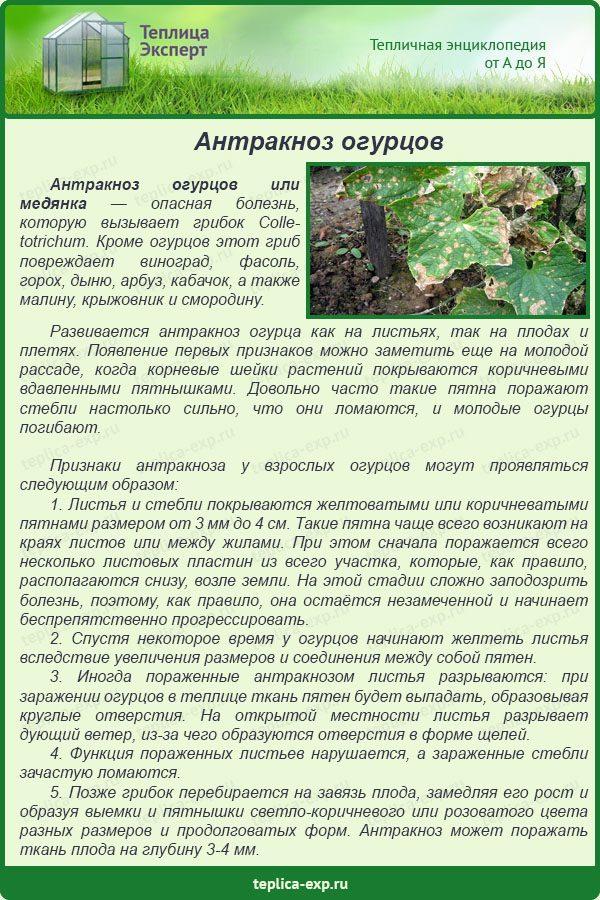 Антракноз огурцов