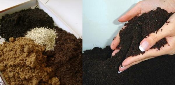 Баклажаны предпочитают богатые, легкие почвы