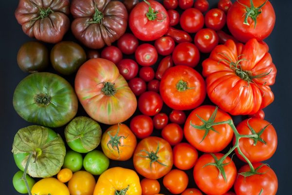 Большой выбор сортов томатов
