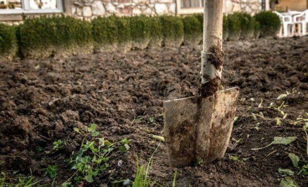 Чтобы эффективно обрабатывать почву на огороде, необходимо знать ее тип